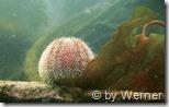 Unterwasserwelt bei der V83