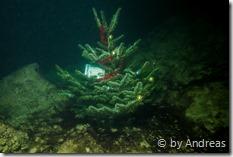 Weihnachtsbaum U-96