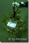 Christbaum von U-96