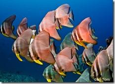 Malediven Fische